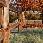 Fall Fence by James Howe