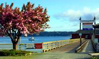 Coupeville Wharf With Tree