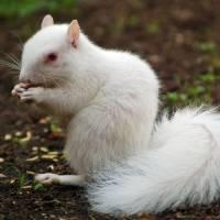 """""""Albino squirrel II"""" by KTShiue"""