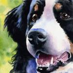 """""Bernese Mountain Dog"""" by k9artgallery"