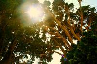 The Giant Trees of Butterfly Valley