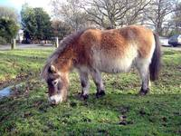 050103_2283_hants_pony