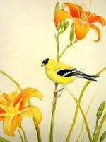 Goldfinch in the Daylilies