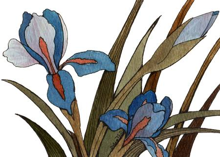 Blue Iris by Diana Delosh
