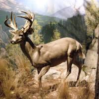 Big Buck by Donnie Shackleford