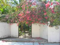 Bougainvilleas on Hacienda Wall, Mismaloya Village