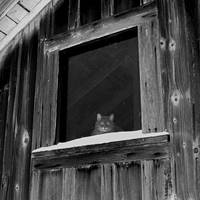 Cat In Window