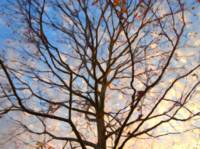 Winter Tree Fading Light