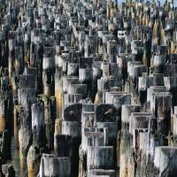 Abstract with Pier pilings Art Prints & Posters by Ian Pattinson