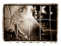 The Gated Weimaraner