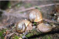 3 snails near the path