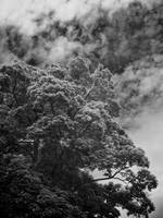 Tree among Clouds