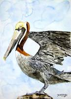 pelican 4 bird painting