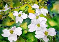 dogwood tree flowers watercolor painting