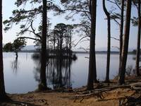 Reflections on Loch Garten