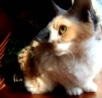 cats - fluffy and cute