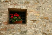 Geraniums on Brick Window