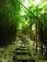 bamboostairs