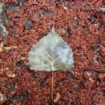 Strange Leaf Prints & Posters