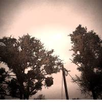 Photo Trees Art Prints & Posters by Christopher Godwin