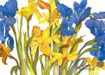 Daffodils and Iris