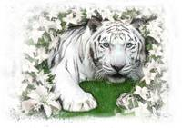 white tiger lilly