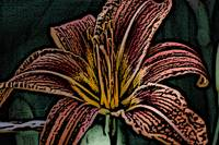 day lilly wood cut