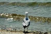 Bird at Beach