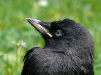 story of a young rook [3/5]