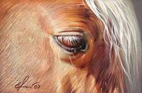 Palomino close-up