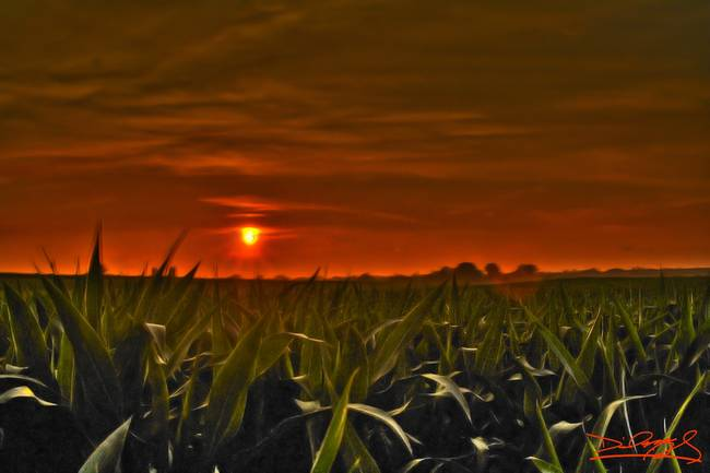 atomic corn field