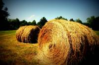 Hay on a Hot Summer Day