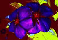Psychodelic Flowers in Black Light