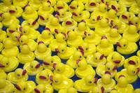 Carny Ducks