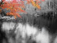 Fall Tree over Pond