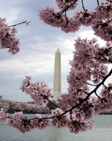 Monumental Blossoms