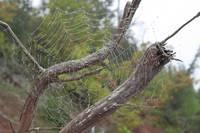 Spider Web (IMG_3924) by Jeff VanDyke