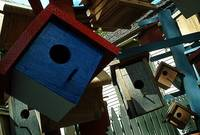 Bird Houses (IM001305A)