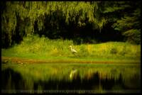 Peaceful Pond and Weeping Willow Paradise :-)