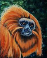 golden_lion_tamarin_0013RC