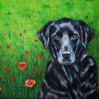 poppy_labrador_portrait_0009RC Art Prints & Posters by Michelle Wrighton