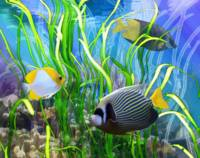 Fishes Among Sea Grass