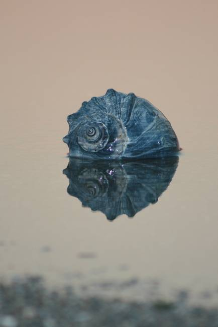Reflection of a shell
