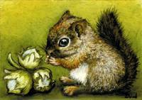 Baby Squirrel and Hazelnuts