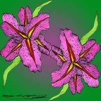 Magenta Lily