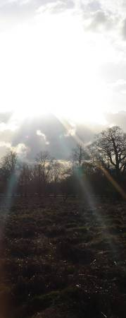 fields of bliss