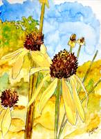 yellow coneflower watercolor painting print