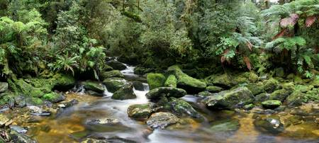 temperate rainforests in Fiordland National Park