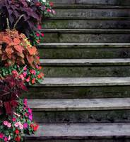 Flowers and Steps...