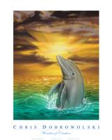 Wonders of Creation - Dolphin Series III